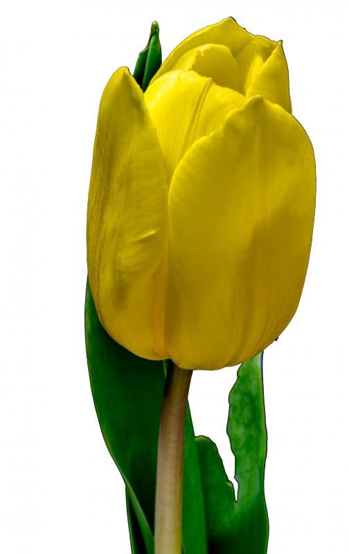 voedingsadvies massage zwolle gele tulp2